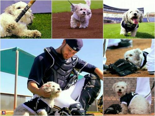 One of the obvious reasons behind the Brewers' success is this guy, Hank. I may be a cat person, but even I can understand Hank's greatness.